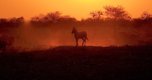 Dusk at the Water Hole