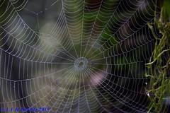 teias - web