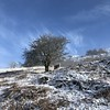 Grasmere winter sheep