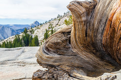 Twisted grain at Olmstead Point