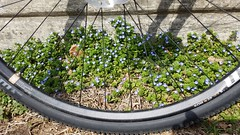 2019 Bike 180: Day 32 - Spring Is In The Air