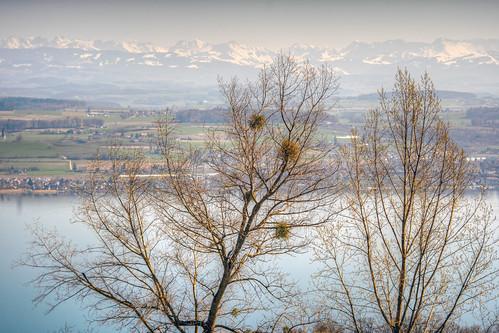 Alps and Lake Murten