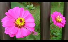 Flores e cores.