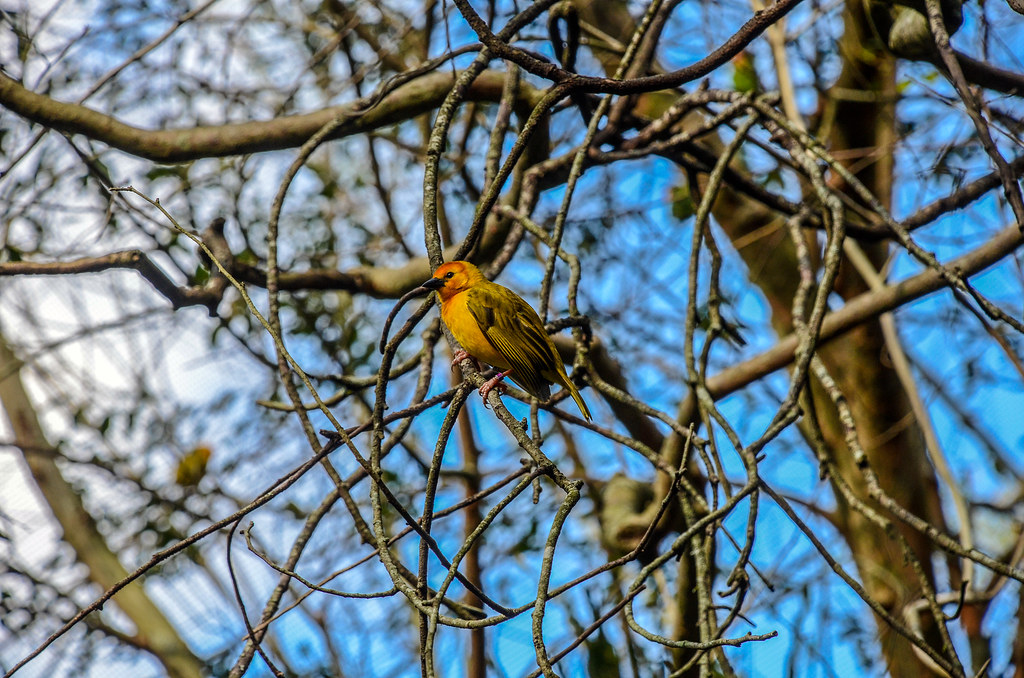 Bird in tree AK