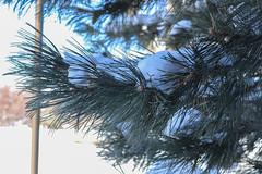 Snow Photos-2