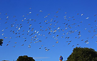 ... and 1.000 pigeons