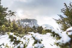 Snowy landscape - Col de Limouches, Vercors