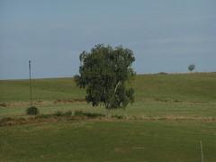 20080910 34462 1011 Jakobus Baum Wiese Hügel