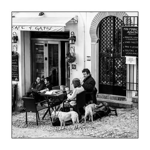 """Deux chiens au """"Café 4 chats""""/ Dos perros en el """"Café 4 Gatos"""""""
