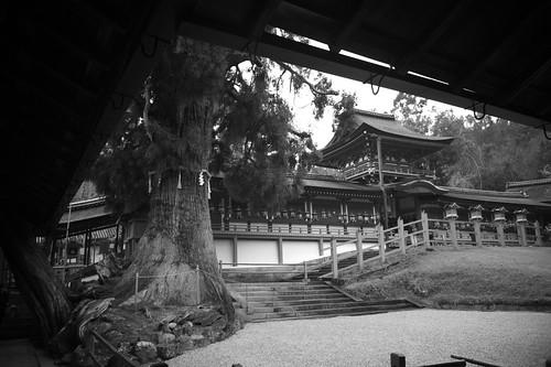 Ringo-no-niwa Garden And Ohsugi