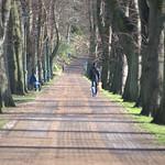 Line of trees at Avenham Park, Preston