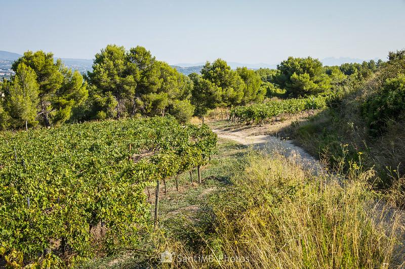 Montserrat desde el camino de la Senabreta al Torrent del Llop