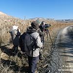Aves en las lagunas de La Guardia (Toledo) 5-1-2019