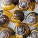 Tiny snail shells by msscoventry