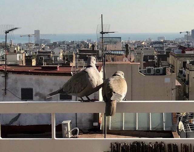 Tortolas en el balcon