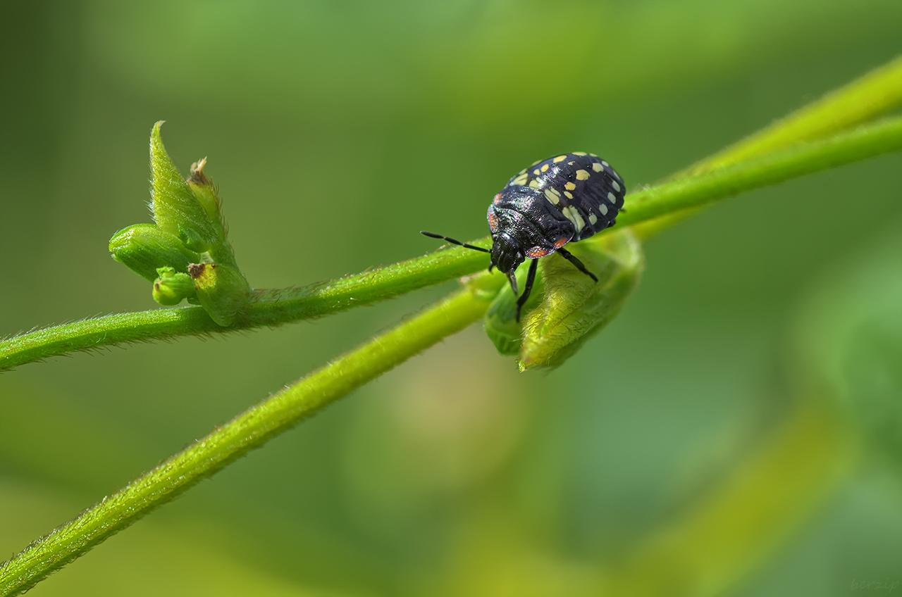 Macros/  proxi/  insectes  - Page 18 32471262187_38c58c8f57_o