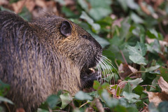 The day I met a nutria