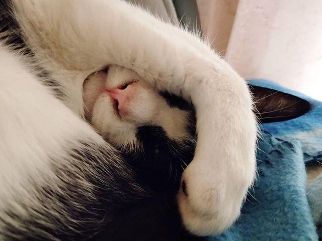 20190222 聽說今天是貓咪日😸 #戴家黑糖蜜 #livingwithcats