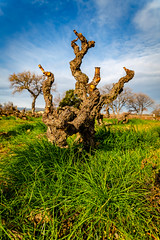 Vigne de Terrats // 2019 // © F.Lombardo - Photo of Saint-Jean-Lasseille