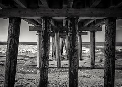 Under the Cayucos Pier B&W