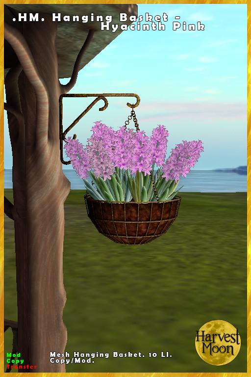 Harvest Moon – Hanging Basket – Hyacinth Pink