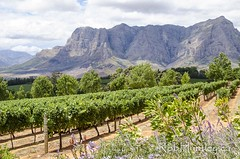 A view at Delaire Graff Wine Estate