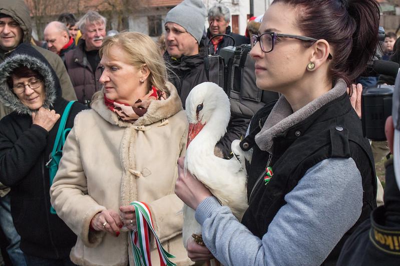 2019 március 15 - gólyák szabadon engedése