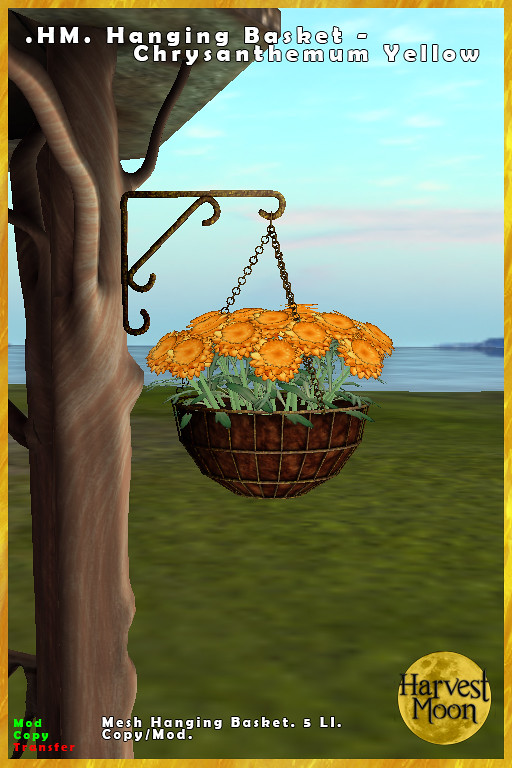 Harvest Moon – Hanging Basket – Chrysanthemum Yellow
