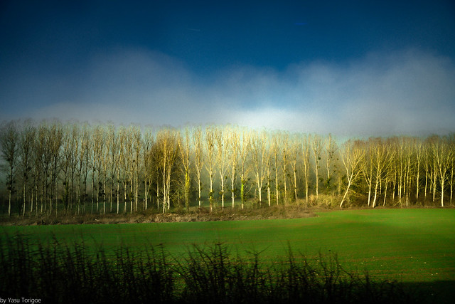 View of the a Line of Trees and Fog as We near Our Destination during Our Afternoon Bus Ride from Auvers-sur-Oise to Vernon, France-36a