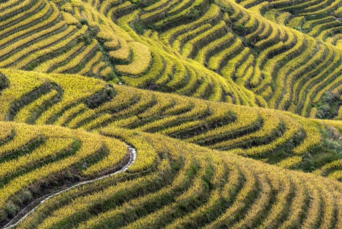 *Ping'an Terraced Rice Fields @ closer view*