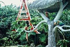 Araras/Macaws