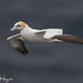 Like a Jet Fighter by GunnarImages (Gunnar Haug)