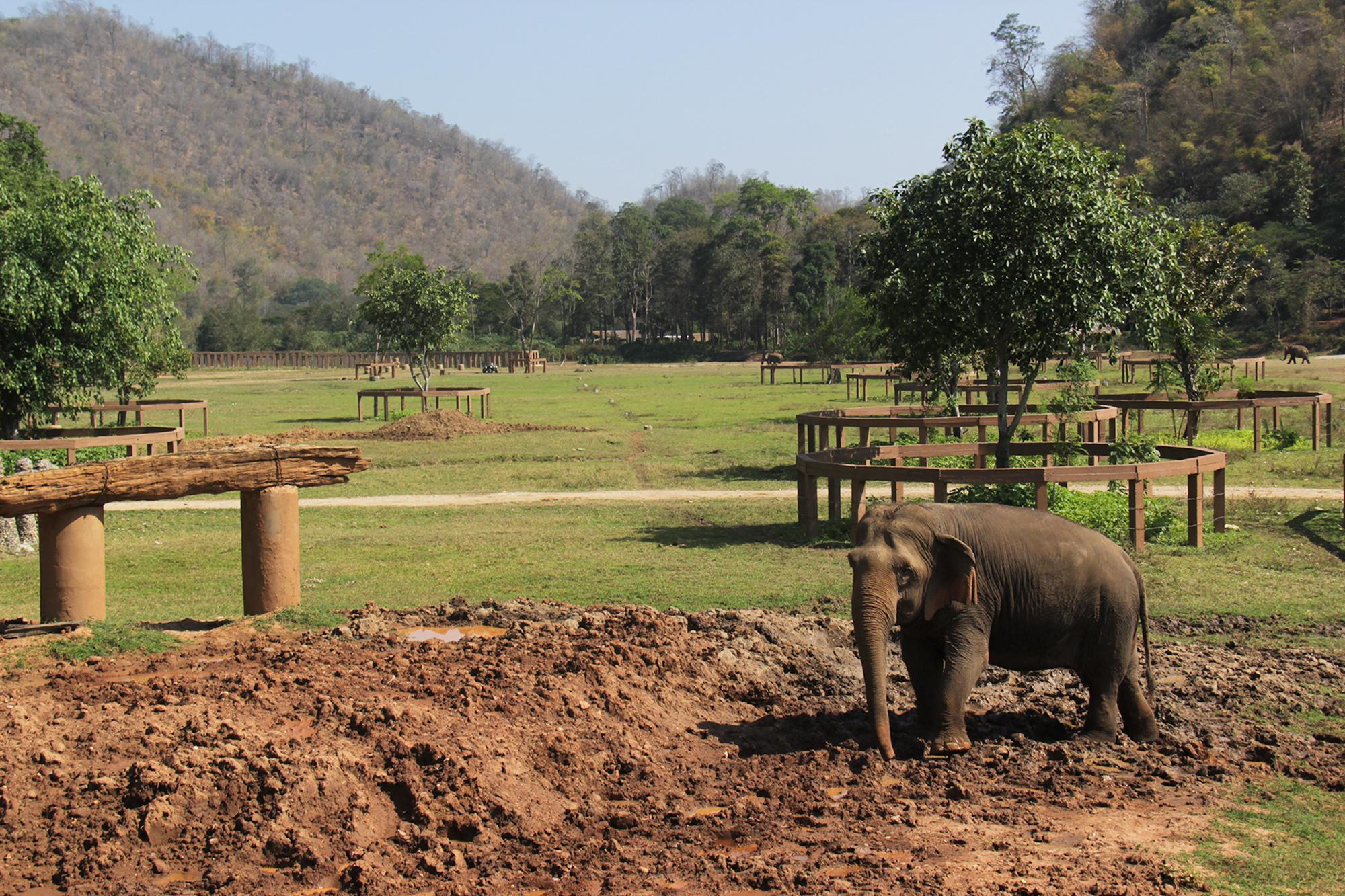 Elephant_Nature_Park5