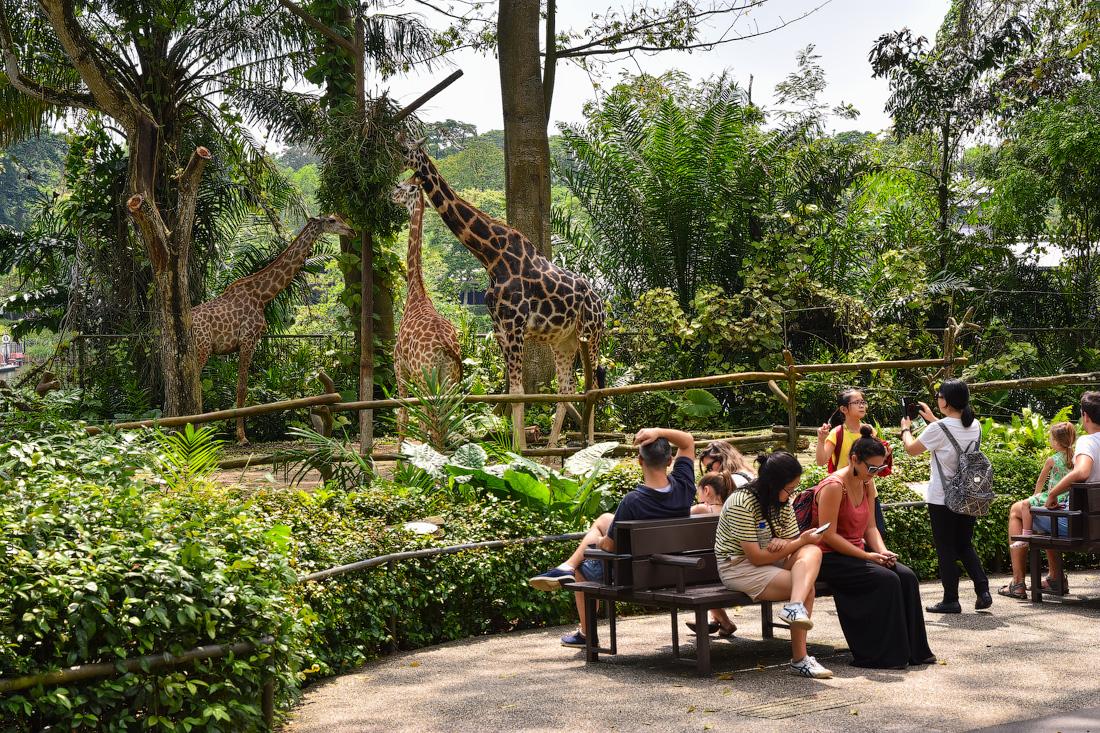 Singapore-zoo-(27)