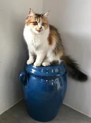 Yuko - Photo of Rieux