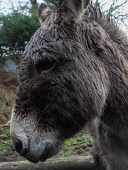 20. Anne Kelly - Little Donkey