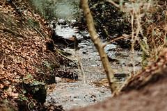 Royden Park Stream