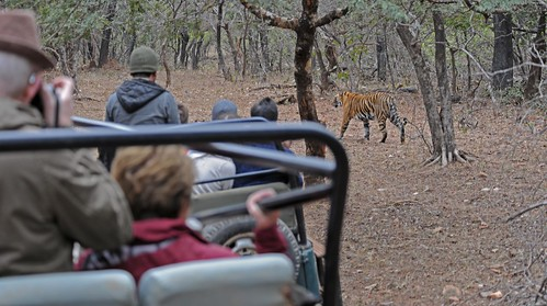 Eco Tourism India DSC_3907