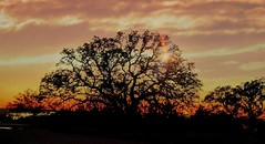 Winter sunset in Texas