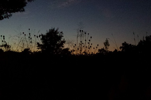 Photo of the skyline at dusk, with native plants such as gray-headed coneflower in silhouette.