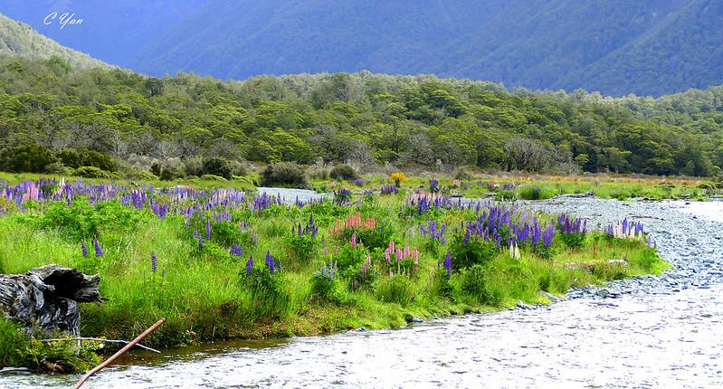 New Zealand - Milford