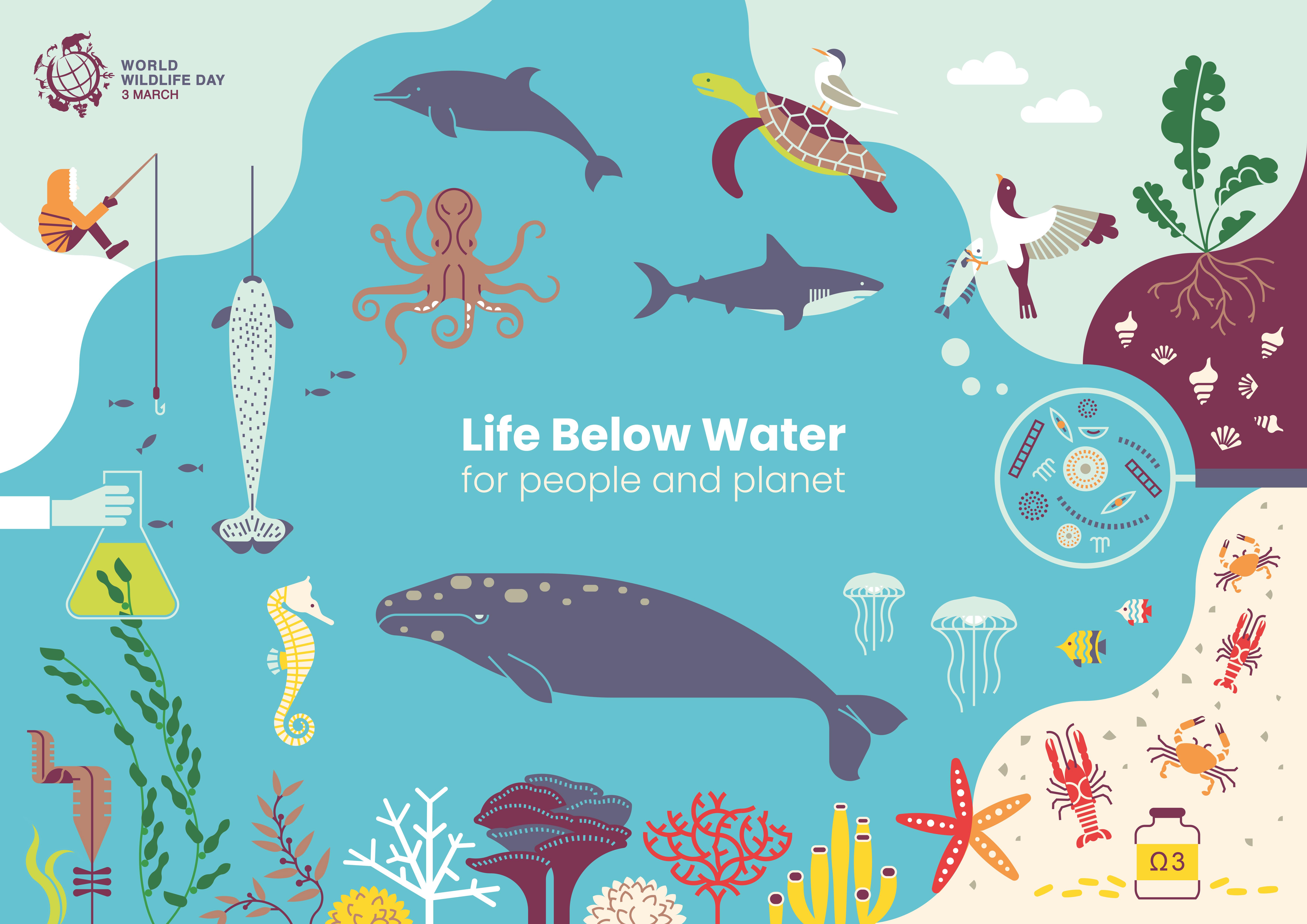 World wildlife day | life below water