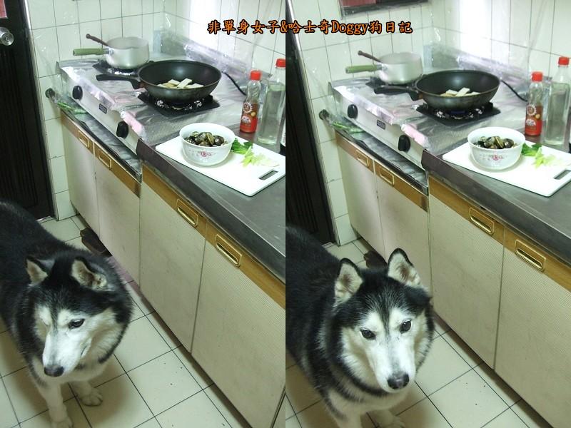 Doggy酒蒸豆腐蛤蜊07