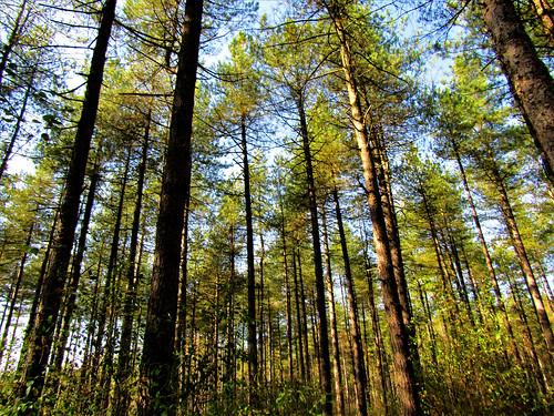 Pijnven Forest in Hechtel-Eksel