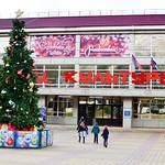 Рождественская  елка  в Геленджике