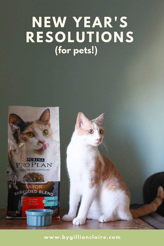 Cat-New-Years-Resolution-Cute-Cat-Purina