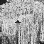 Foliage Cascade by Martin Parratt