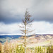Cardrona Forest, Scottish Borders by iainmac2