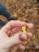 Chewed nut