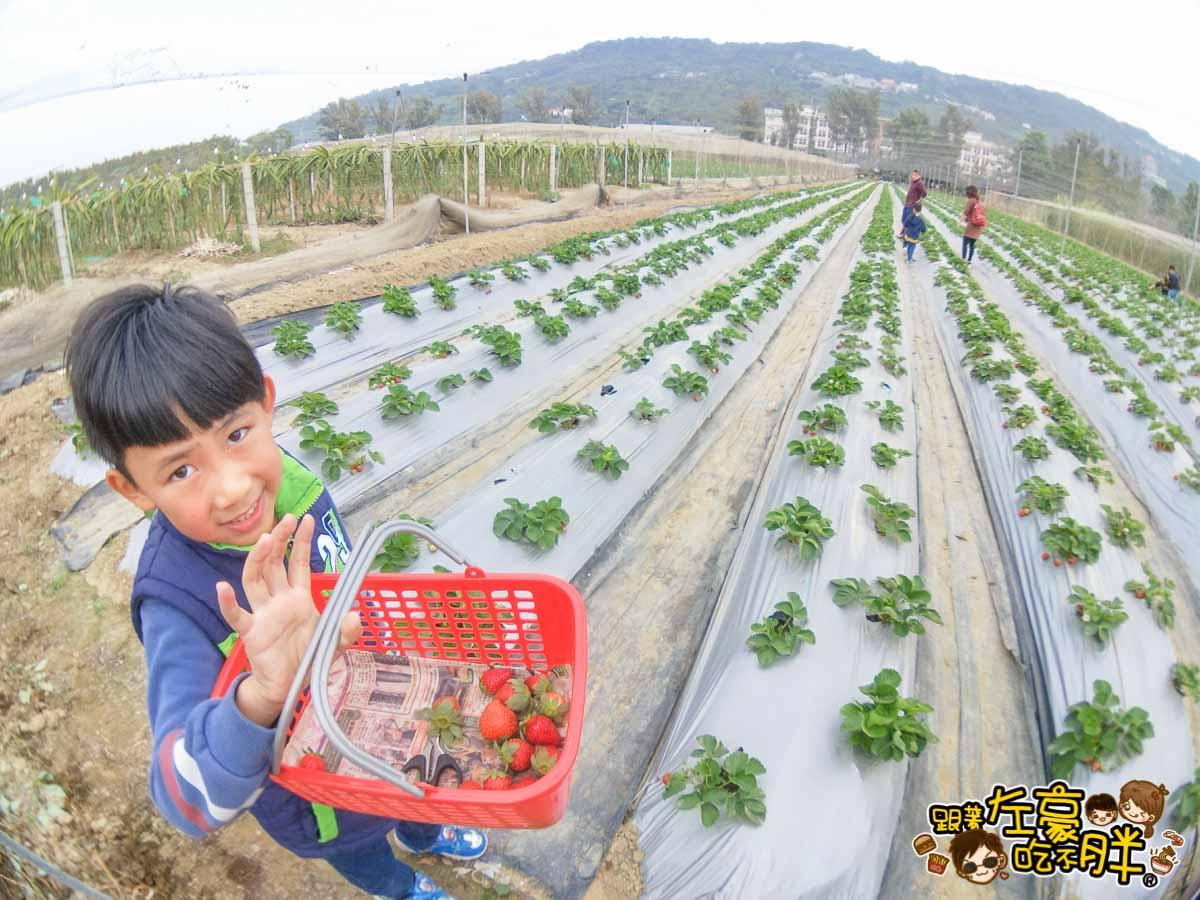 大岡山觀光草莓園-7